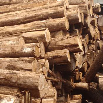 Costa Rica Teak Logs manufacturers delhi