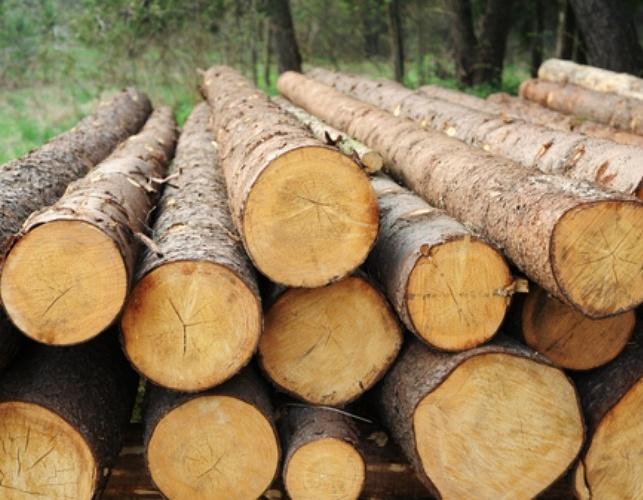 Round Pine Wood manufacturers delhi