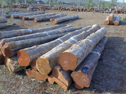 Sal wood Log  manufacturers delhi