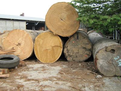 Yellow Meranti Log manufacturers delhi