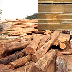 Ivory Coast Teak Wood manufacturer in New Delhi